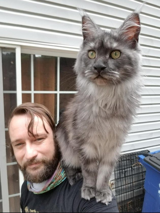 Man with large cat sitting on shoulder