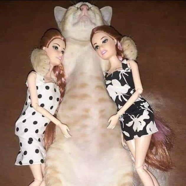 cat sleeps with Barbie dolls