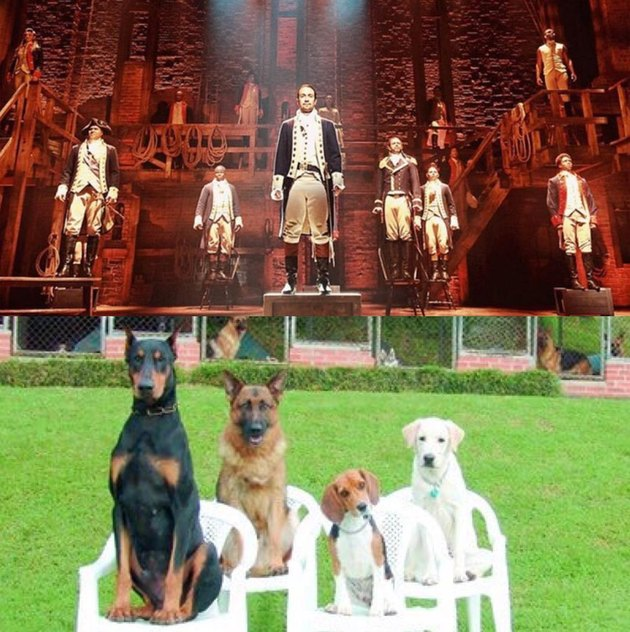 cast of Hamilton and dogs standing on chairs