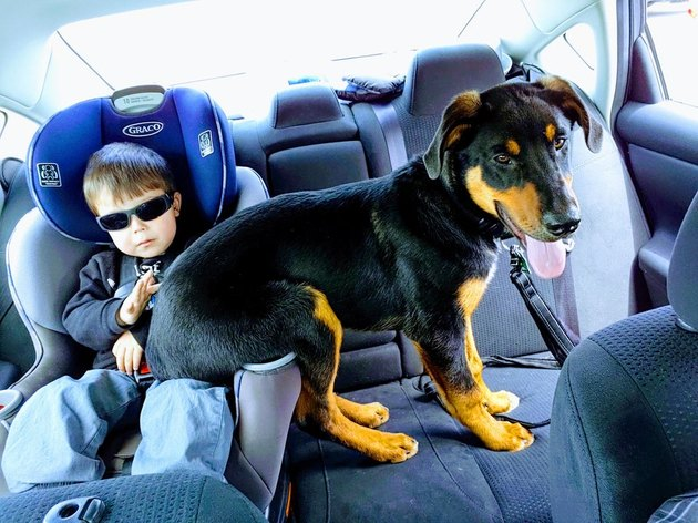 Puppy sitting on lap of toddler in car seat