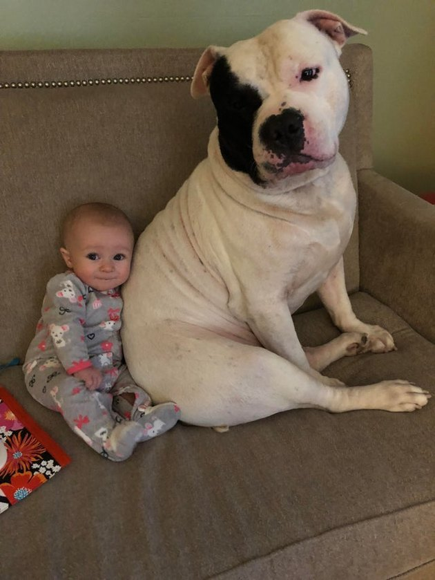 Dog and baby sitting on couch together