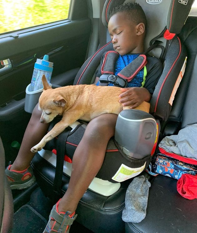 Boy sleeping in car seat with dog in lap.