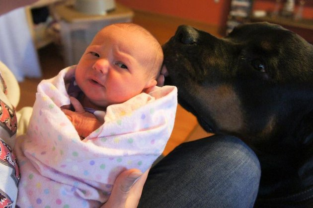 Dog licking head of skeptical baby.