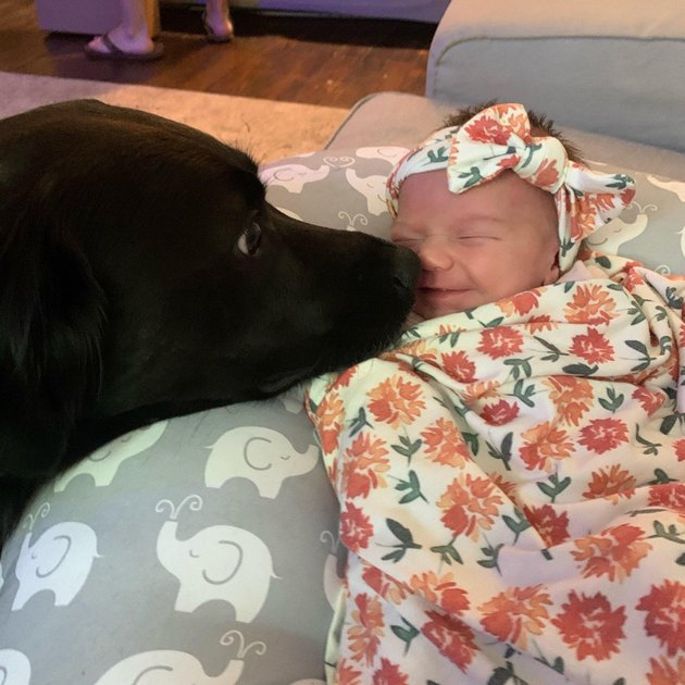 Dog sniffing baby on couch