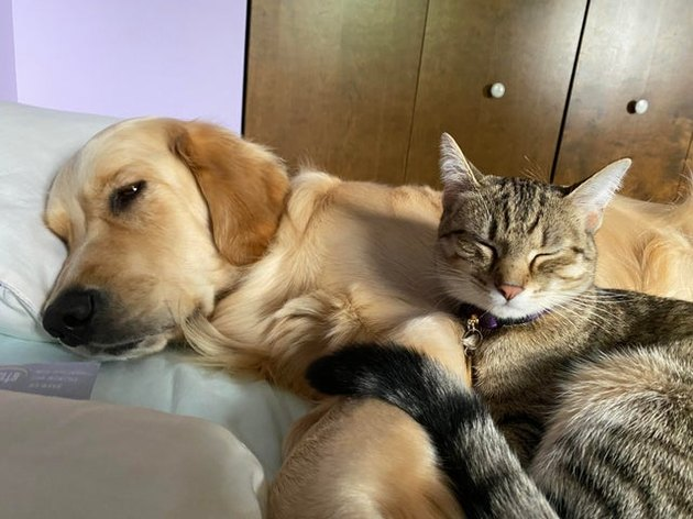 Dog cuddling with sleeping cat