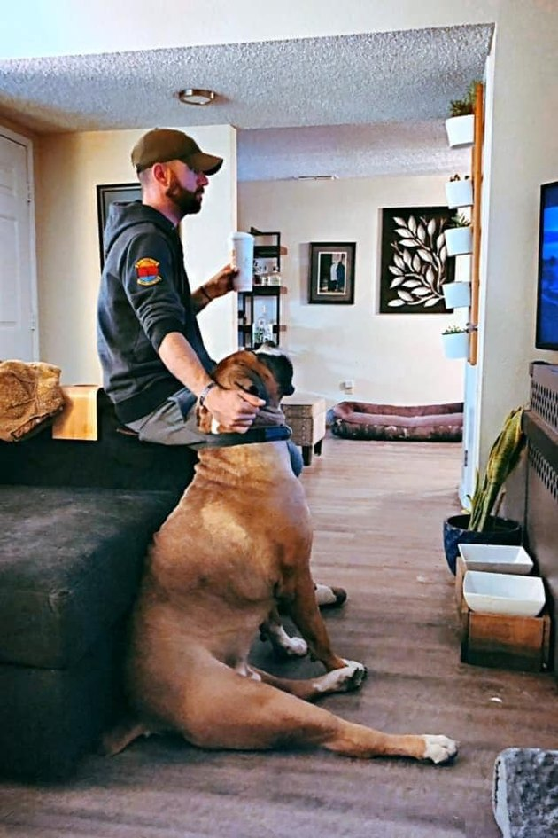 huge dog watches tv