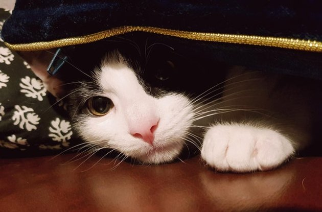 Cat peeking out from under bed