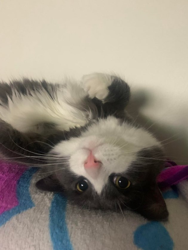 Cat with pink nose laying upside down