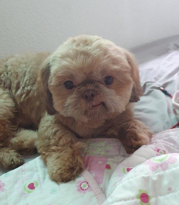 little dog smiling