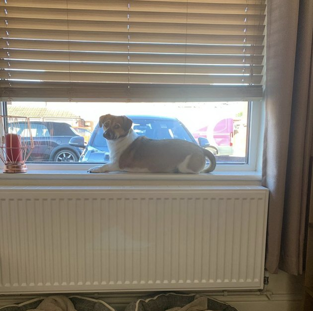 dog on windowsill