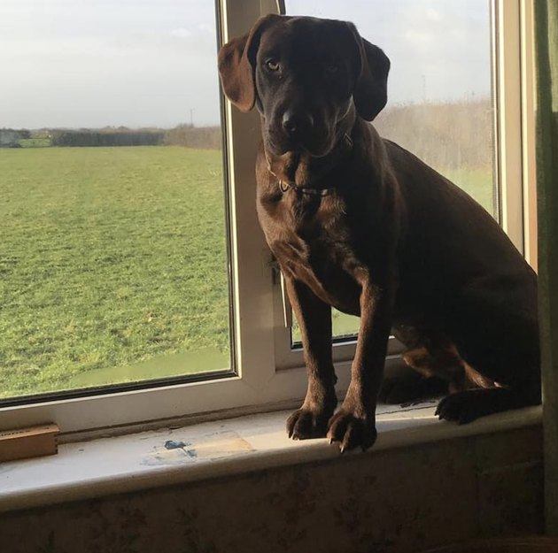 dog standing on windowsill