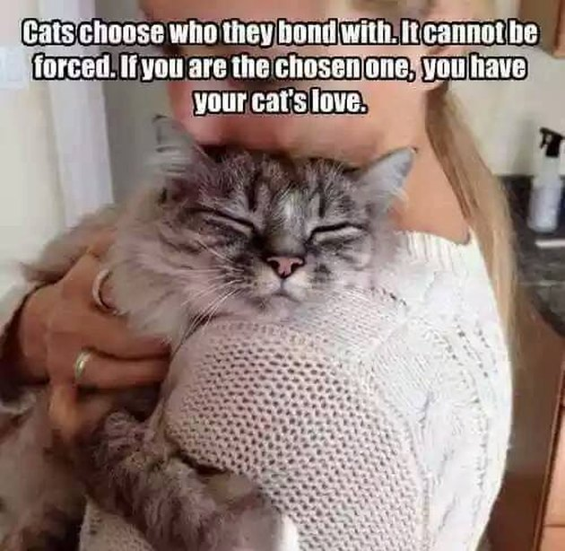 cats choose who they bond with