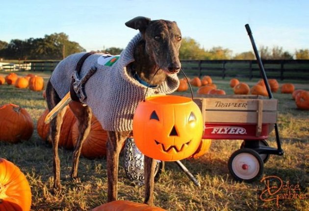 dog holding trick or treat bucket
