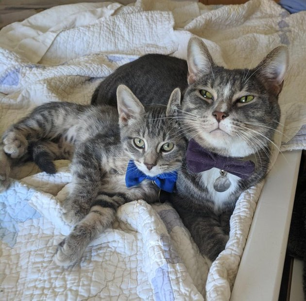 Cat and kitten wearing bowties.
