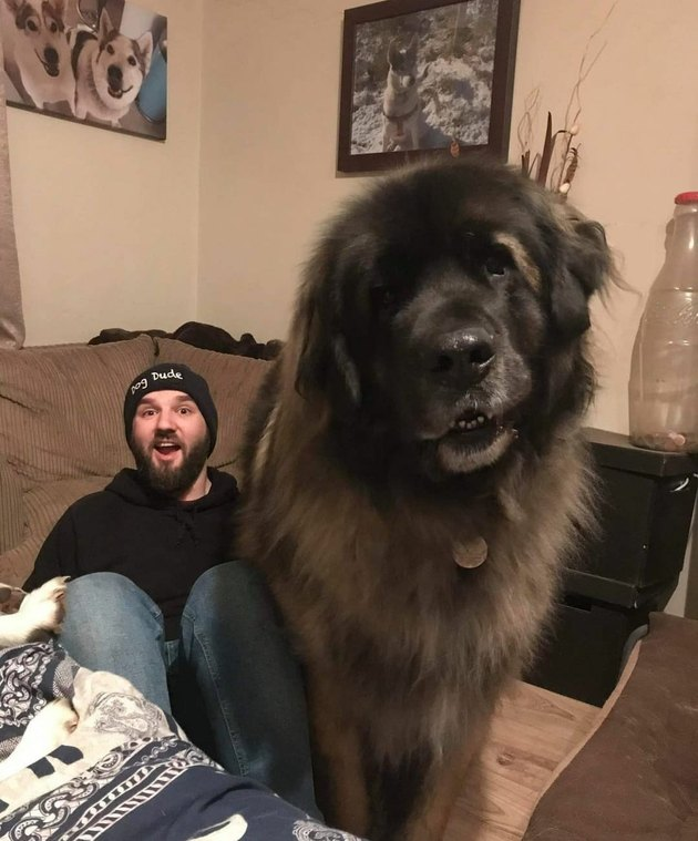 huge dog poses with man for photo