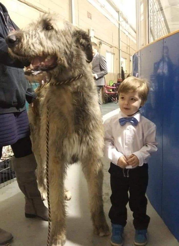 big dog and small boy