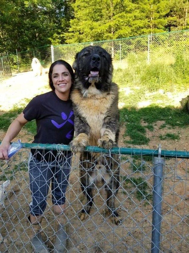 big dog towers over human