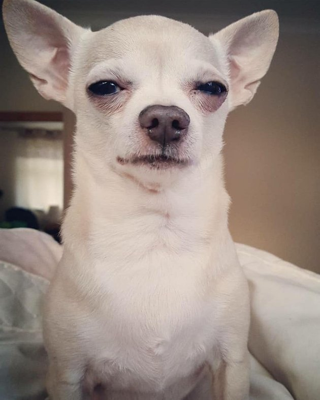 dog squinting
