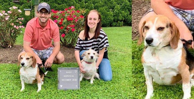dog can't believe family adopted second dog