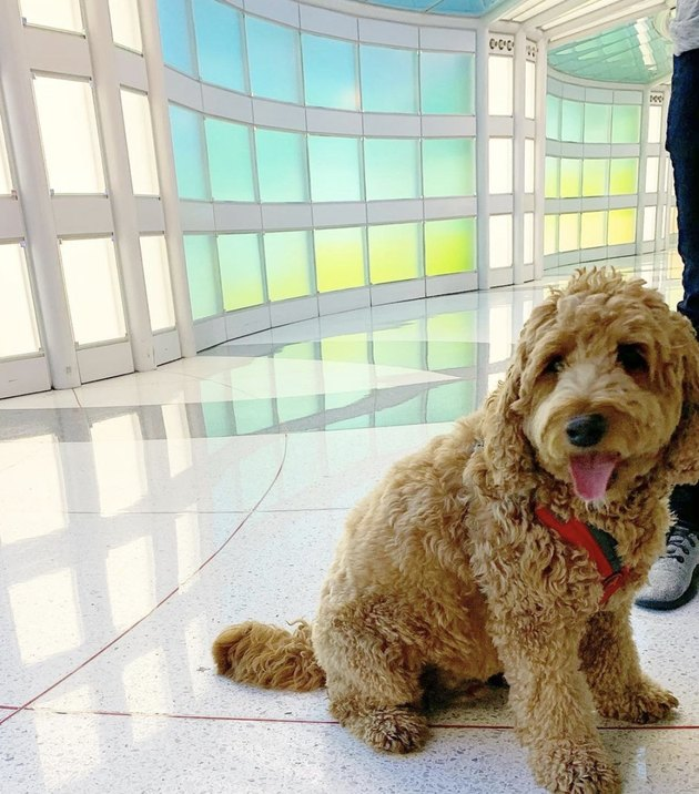 dog waiting in airport