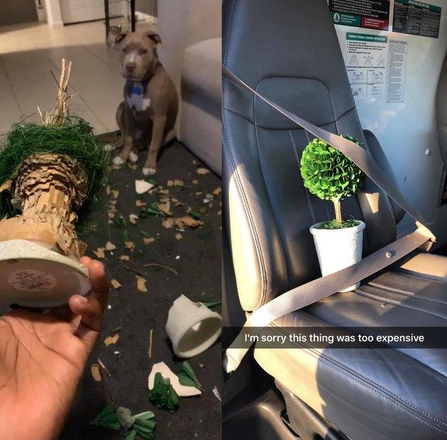dog eats expensive tree