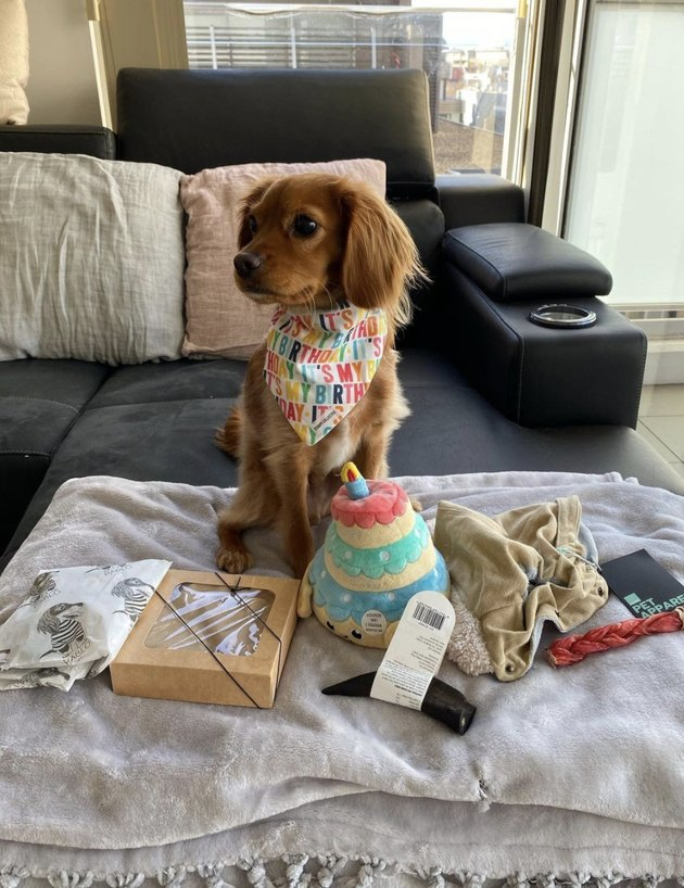 dog with his birthday presents