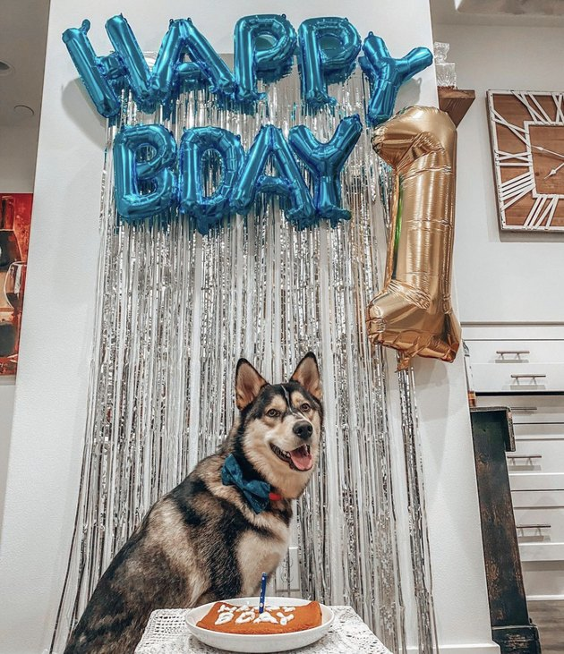 dog with happy bday balloons