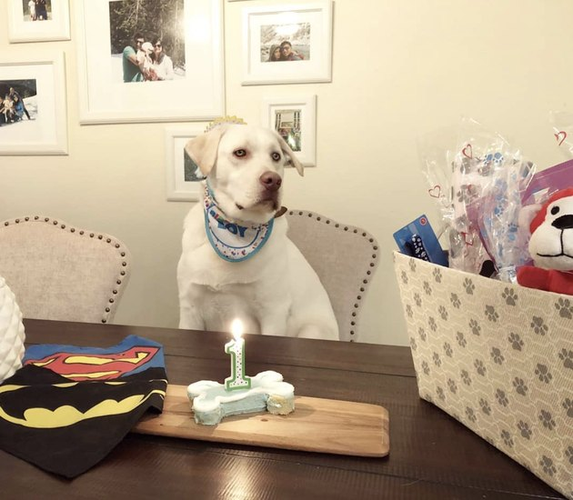 dog with a birthday cake bone