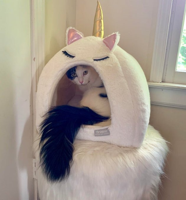 Cat with fluffy tail in a cat tower
