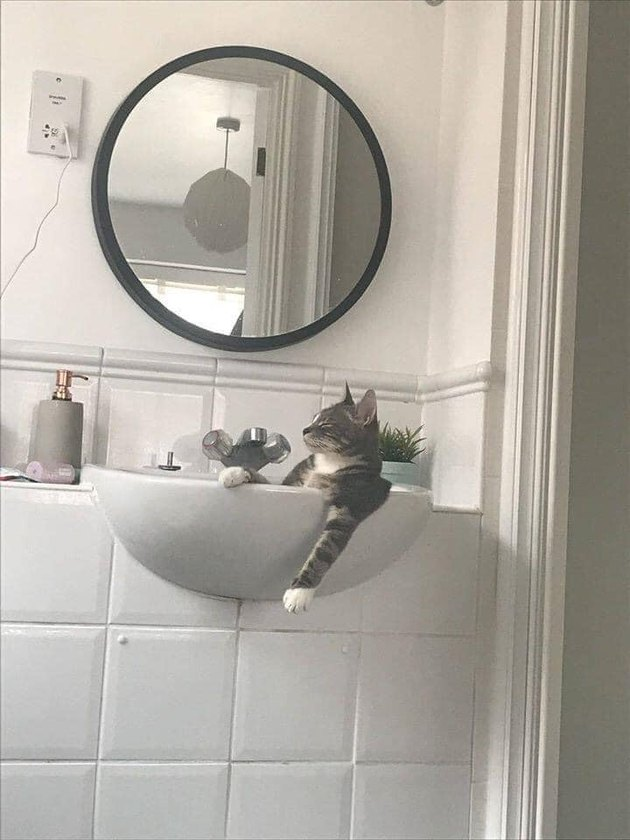 cat chilling in sink