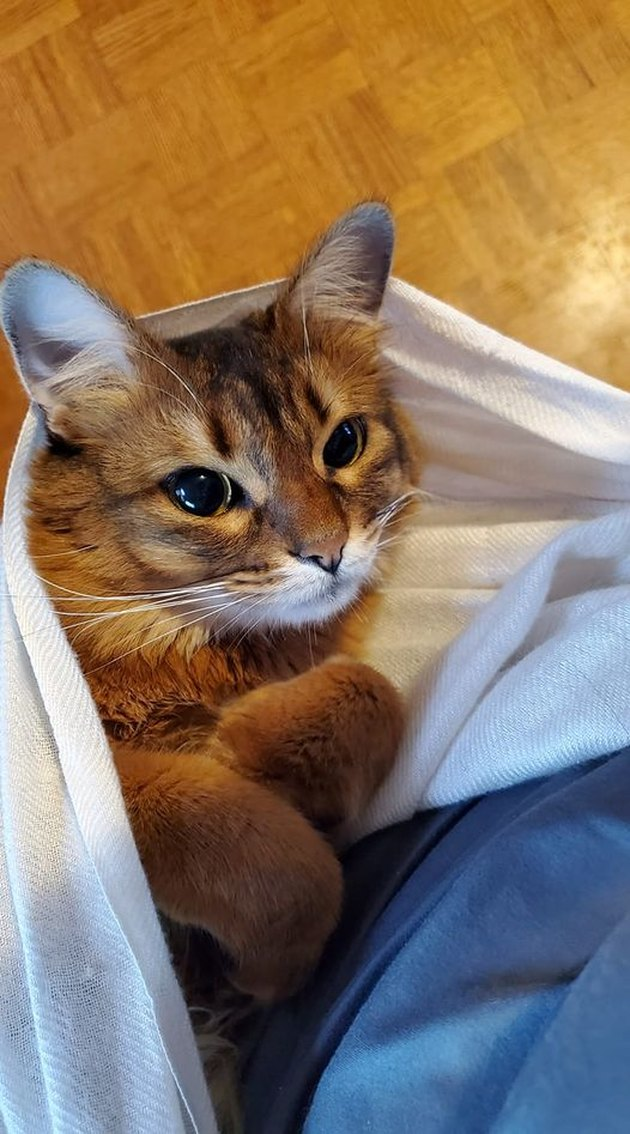 cozy cat curls up front paws