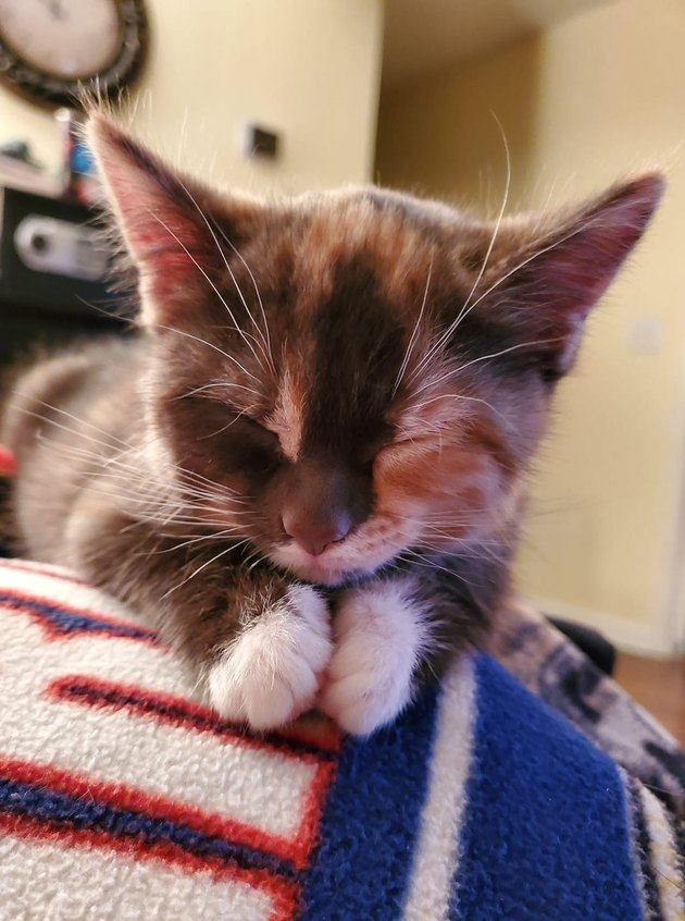 cat rests head on paws