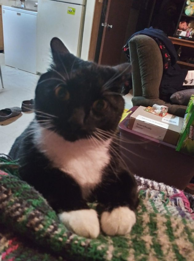 cat looks askew at human