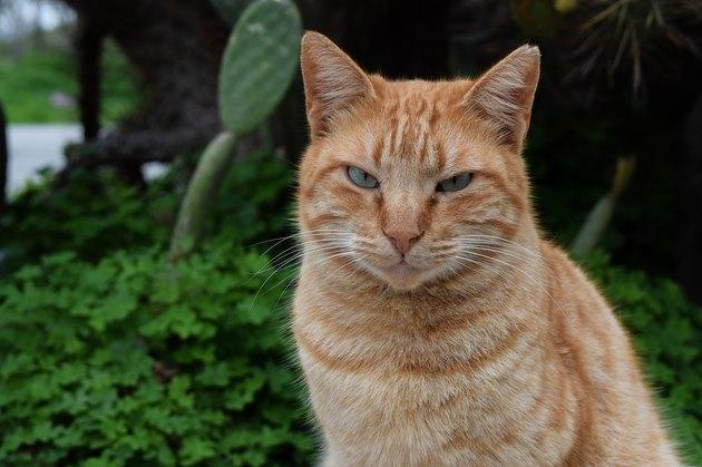 Orange cat in nature