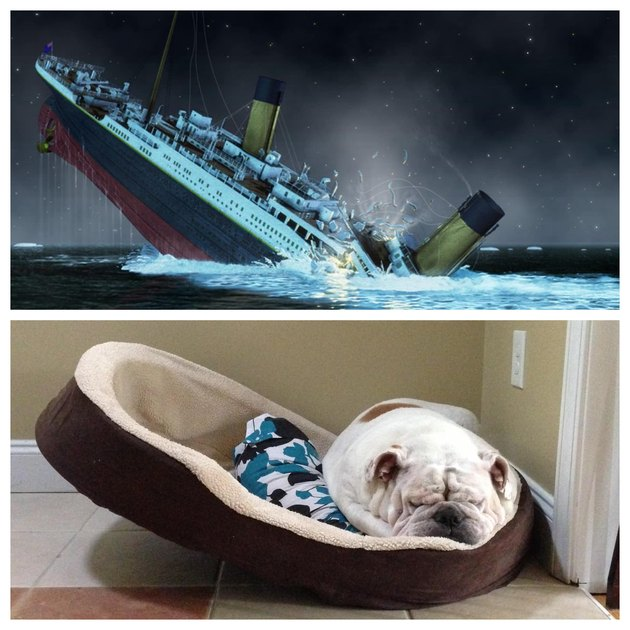 dog in dog bed resembled sinking Titanic