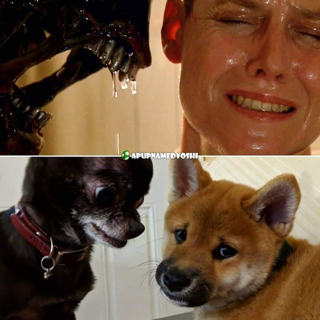 dogs reenact scene from Alien 3
