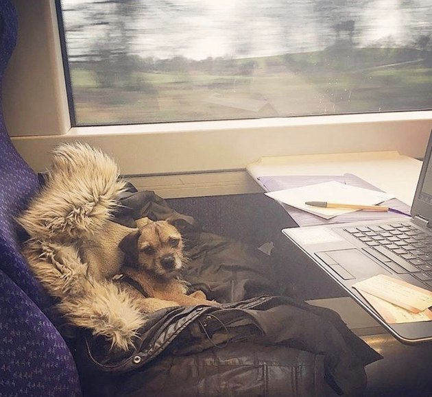 dog in front of laptop on train