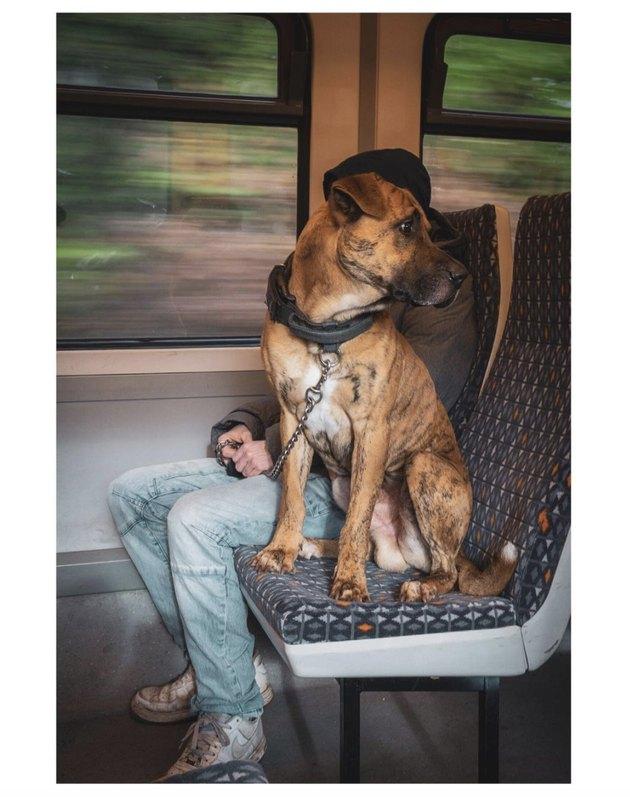 dog on train seat