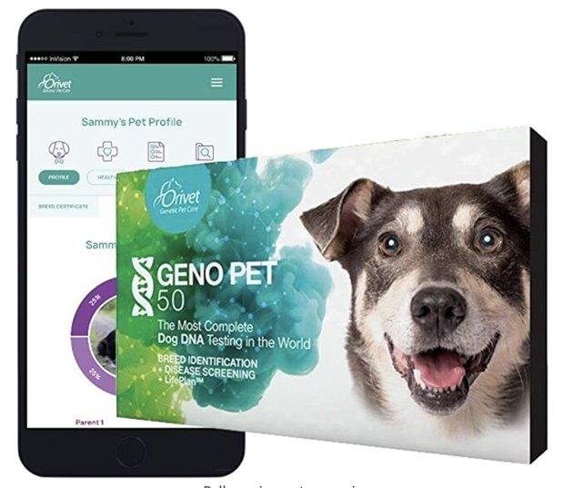 Orivet GenoPet 5.0 Dog DNA Test