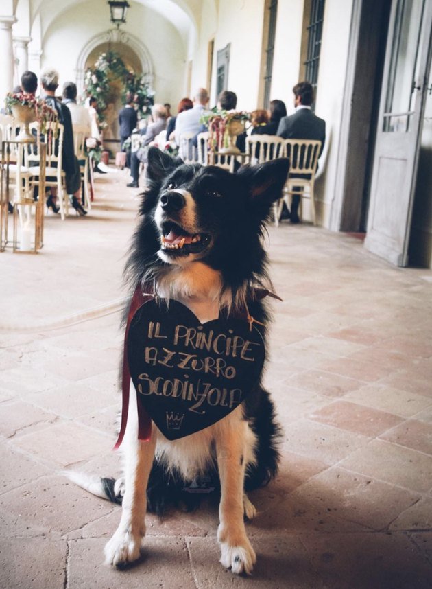 dog holding sign at wedding