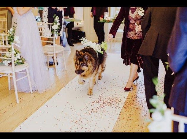dog walking down aisle