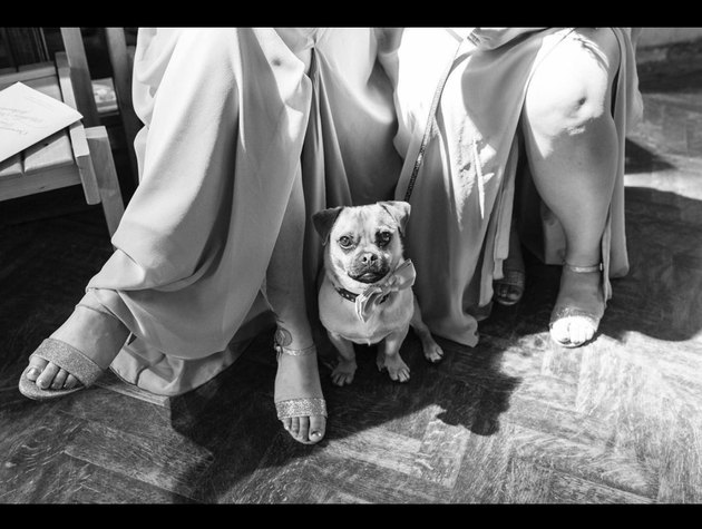 dog sitting by bridesmaids