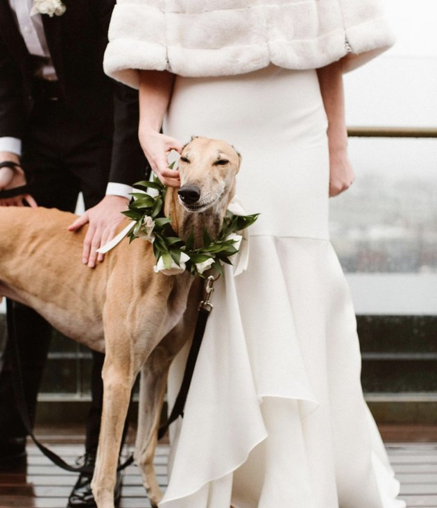 dog standing by bride