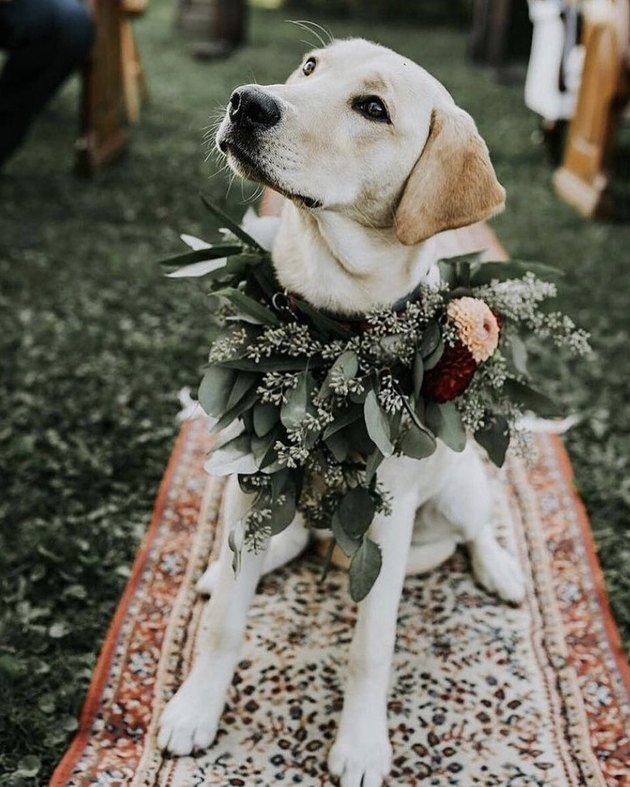 dog with flower necklace