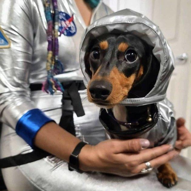 dog wearing NASA astronaut costume