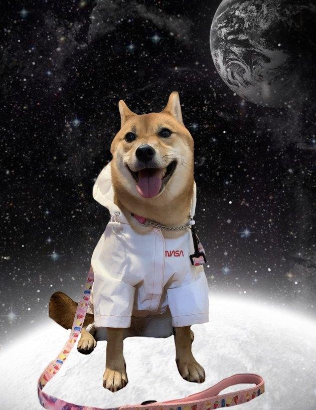 dog in NASA uniform in space