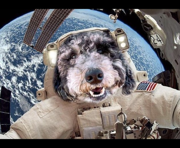 dog in astronaut costume in space