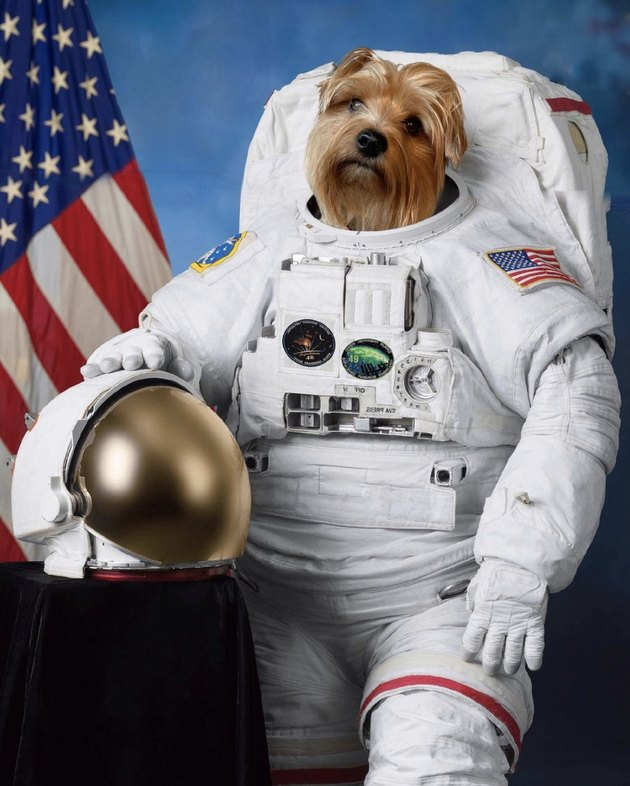 dog in astronaut uniform next to American flag