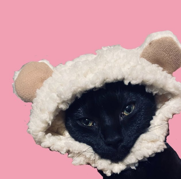 cat in fluffy hat