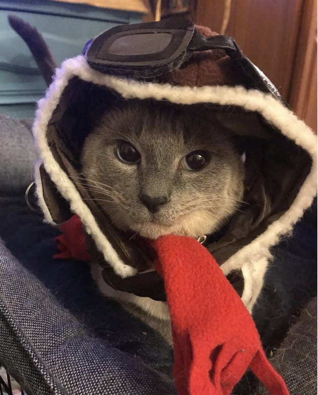 cat in pilot gear